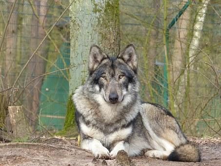 Sif & Ulvefolket