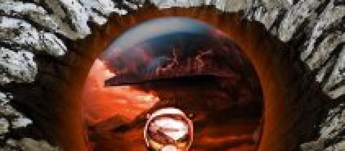 DefremmedeForside-211x300